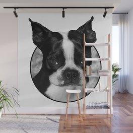 Boston Terrier Head Shot Wall Mural