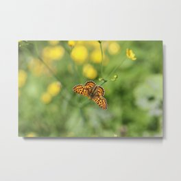 Small pearl-bordered fritillary and buttercups Metal Print