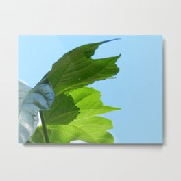 Mulberry leaves Metal Print