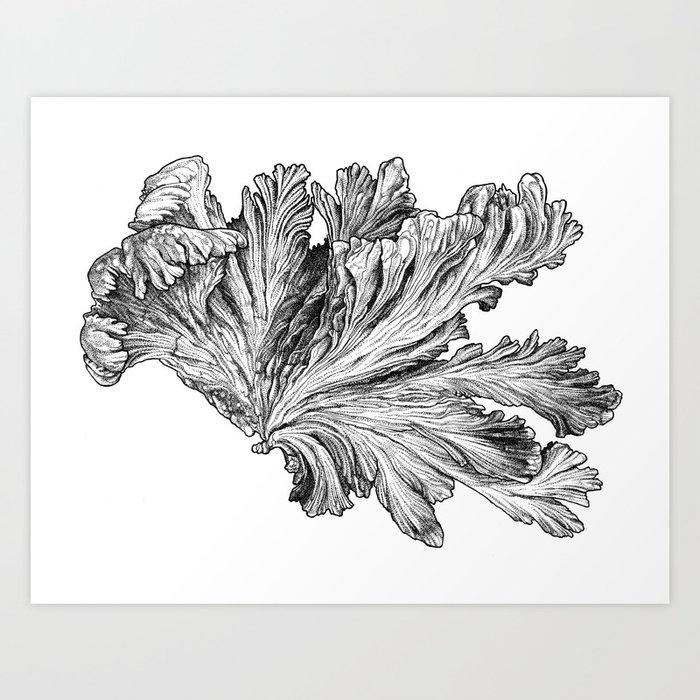 Charybdis Art Print
