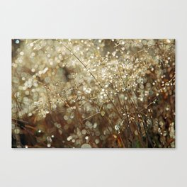 Autumn dew Canvas Print
