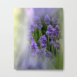 dreaming of lavender Metal Print
