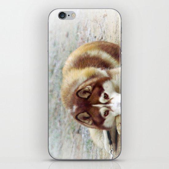 Siberian Husky  iPhone Skin