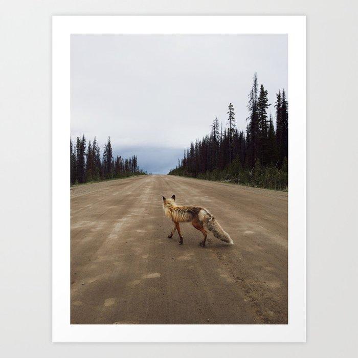 Road Fox Art Print