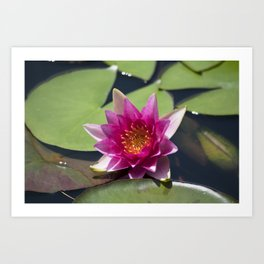 Longwood Gardens - Spring Series 305 Art Print