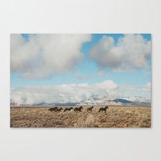 Running Reservation Horses Canvas Print