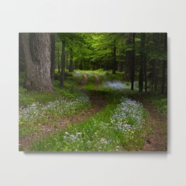 Forget-me-not Trail Metal Print