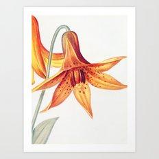 X. Vintage Flowers Botanical Print by Pierre-Joseph Redouté - Meadow Lily Art Print