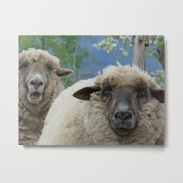 Disappointed sheep Metal Print