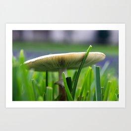 Mushroom Up Close Art Print