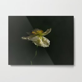 White Poppy Blossom Metal Print