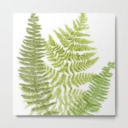 Fresh Fern II Modern Botanical  Metal Print