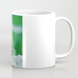 Snail on Silver Birch Coffee Mug