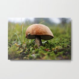 Wild Mushroom Photography Print Metal Print