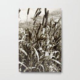 Wild grass Metal Print