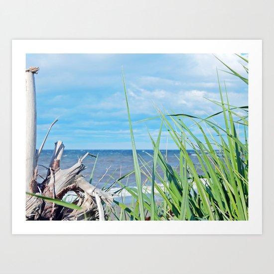 Through Grass and Driftwood Art Print