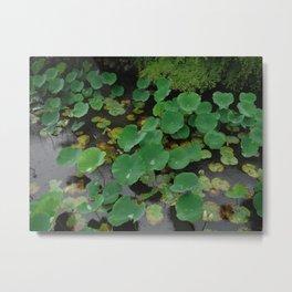 Pond Pads 2 Metal Print