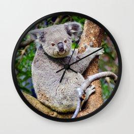Australian Koala Bear Photo Wall Clock