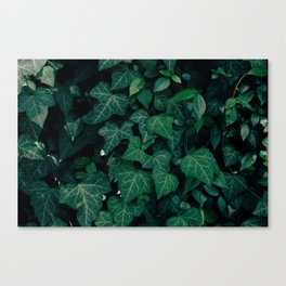 Forest of emotion Canvas Print