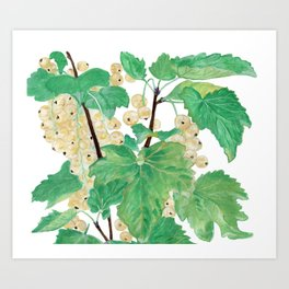 Branch of white currants Art Print