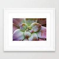 succulent Framed Art Prints featuring Succulent by Lindsay Faye