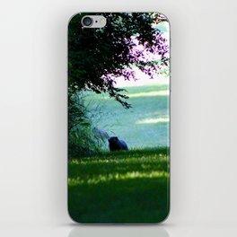Lazy Evening iPhone Skin