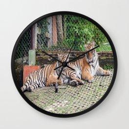 Indo-china Tigers_Buddies Wall Clock
