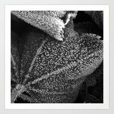 frosty time II Art Print