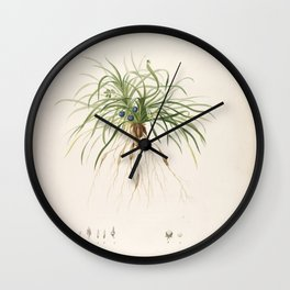 convallaria japonica Redoute Roses 1 Wall Clock
