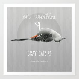 Gray Catbird in Death Art Print