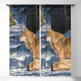 Wolf Portrait (98) Blackout Curtain