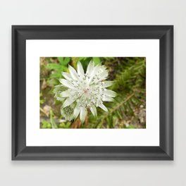 woodland flower Framed Art Print