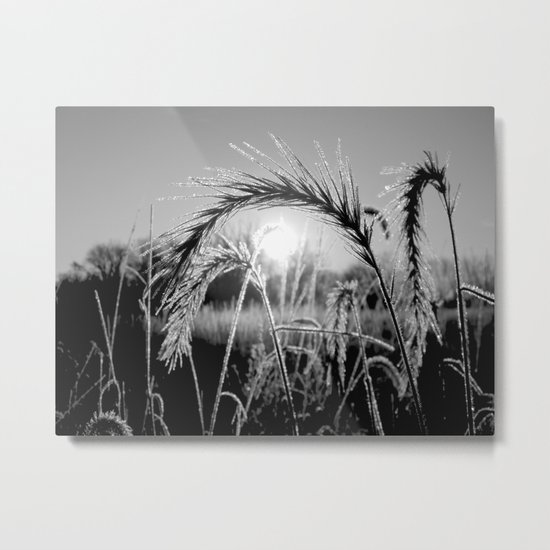 Wheat Sunrise B&W Metal Print
