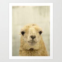 White Llama... Art Print