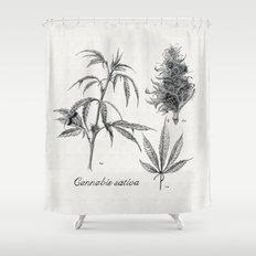 Cannabis sativa Shower Curtain