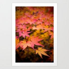 Japanese Elm Leaves Art Print