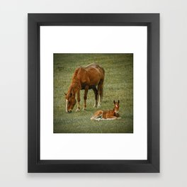 Horse And Foal Framed Art Print