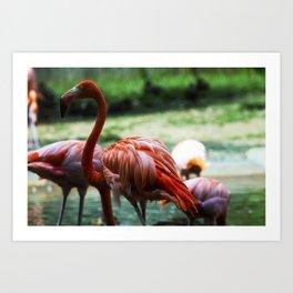 Flamingo Style Art Print