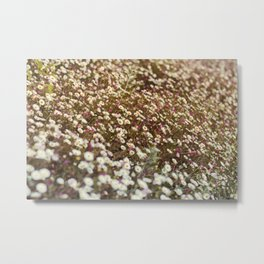 Daisy Fields Metal Print