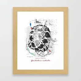 Natura Technica - Radiated Tortoise Framed Art Print