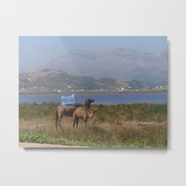 Camels in Morocco Metal Print