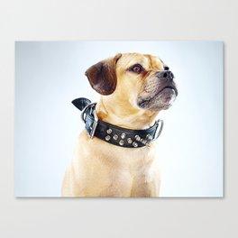 Super Pets Series 1 - Super Oaks 2 Canvas Print