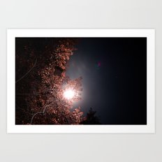 Moon and Star Lit Trees Art Print