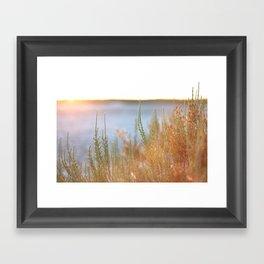 Mediterranean plants during sunset in the Camargue, France Framed Art Print