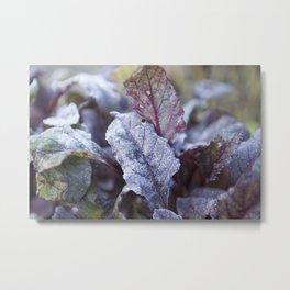Frozen Beetroot Metal Print