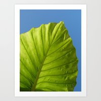 Green Leaf Blue Sky Art Print