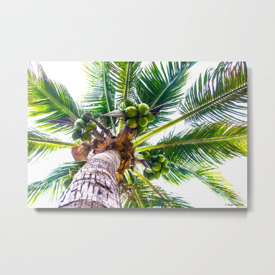 How About Those Coconuts Metal Print