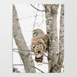 Barred Owl Side-Eye Poster