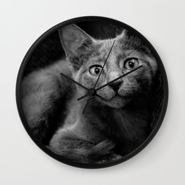 Russian Blue Kitten Portrait Wall Clock