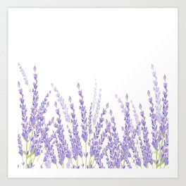 Lavender in the Field Art Print